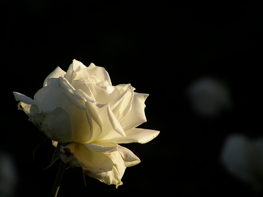 SP550_20121110_023.jpg